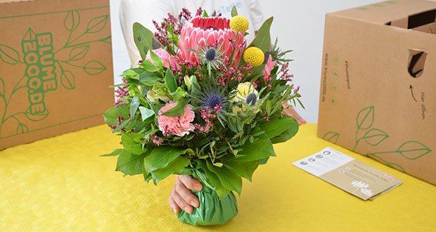 Blume2000 Blumenstrauß Festival des Sommers im Test - feiner Strandflieder, beeindruckende Protea, Pistazie, Salal und die kugeligen gelben Blüten der Craspedia ergänzen die farbenfrohe Pracht