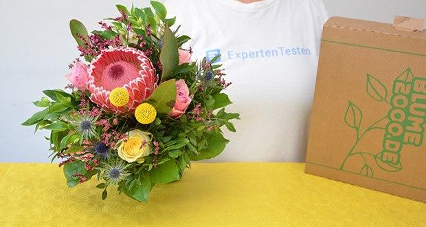 Blume2000 Blumenstrauß Festival des Sommers im Test - mit viel Liebe und Leidenschaft haben Floristen von Blume2000 dieses herrliche Arrangement aus edlen Rosen, feinen Alstromerien, extravaganten Disteln und verspielten Nelken kreiert